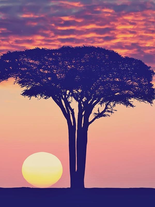Safaris Exclusivos