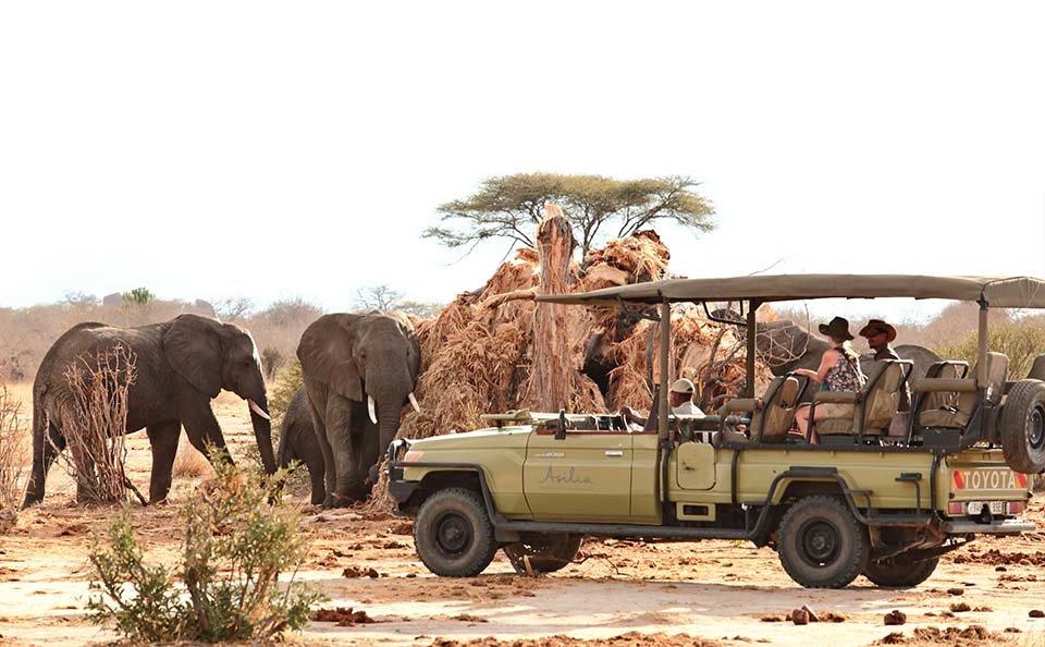 Safari exclusivo Serengueti
