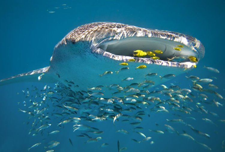 Buceo Australia Coral Sal Salis Perth