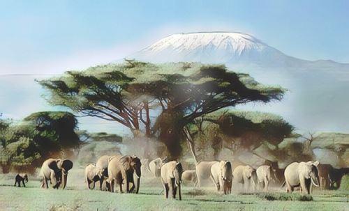 Kenia-amboseli0-low.jpg
