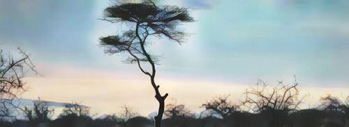 Tanzania-arusha0-low.jpg