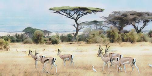 Botswana-chobe0-low.jpg