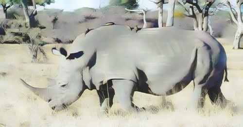 Zimbabwe-hwange0-low.jpg