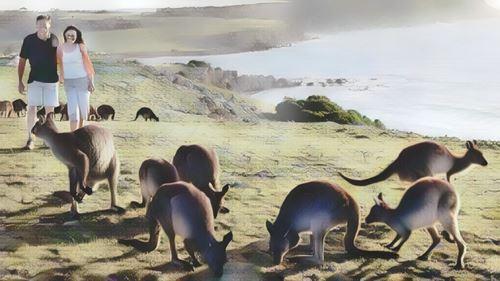 Australia-kangaroo-island0-low.jpg