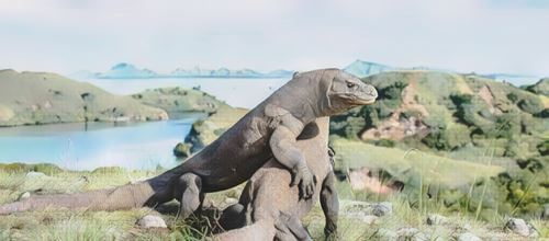 Indonesia-komodo0-low.jpg