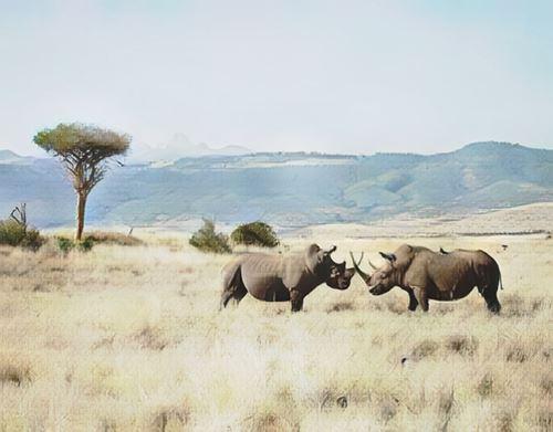 Kenia-lewa0-low.jpg