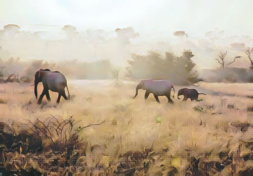 Kenia-masai-mara0-low.jpg
