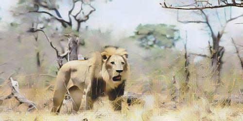 Botswana-moremi0-low.jpg