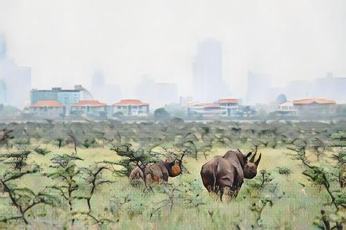 Kenia-nairobi0-low.jpg