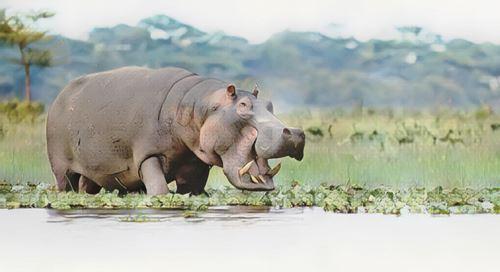 Kenia-naivasha0-low.jpg