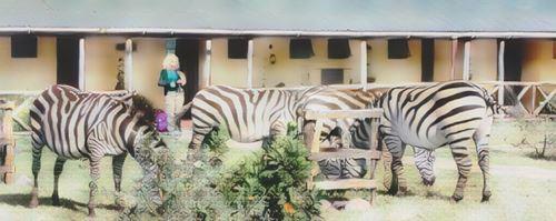 Tanzania-Ngorongoro-ngo-rhino0-low.jpg
