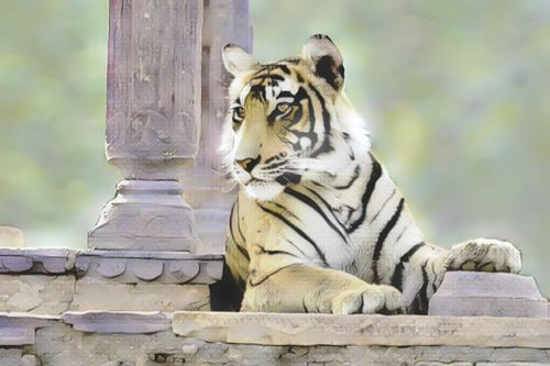 India-ranthambore0-low.jpg