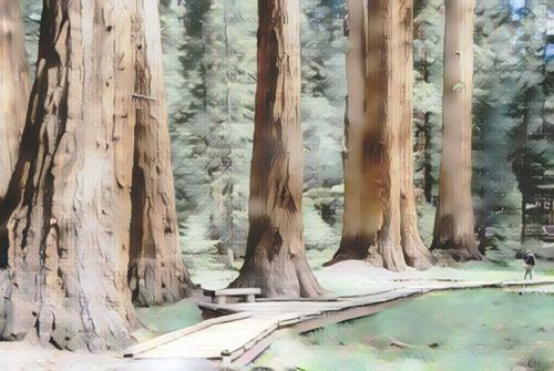 Estados Unidos-sequoia-national-forest0-low.jpg