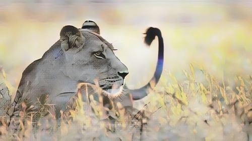 Tanzania-serengeti0-low.jpg